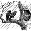 Bencillik Nedir- Egoizm- Bencilliğin Nedenleri- Zararları kuşlar