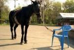 At sandalyeye bağlı Özgürlük Nedir