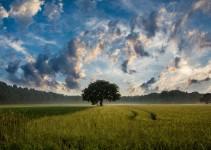 Düşündürücü sözler Ağaç ve otlaklar