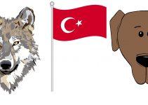 Amerikanın Türkiye Yorumu